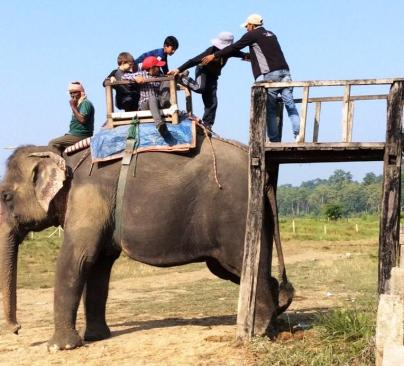 People boarding an elephant - it looks hard, but its quite easy.
