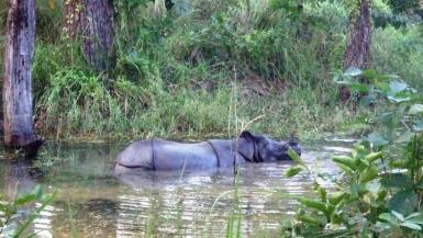 We had to be really quiet when we spotted any wild animals like this rhino.