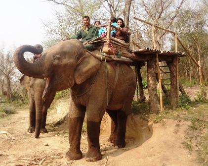 "The elephant ""driver"" rubs his feet behind the elephants ears to steer - no kidding!"