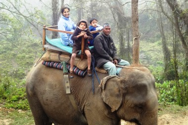 Such a neat experience to see wildlife atop an elephant!