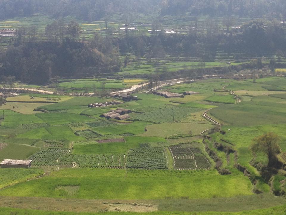 Beautiful Layers Of Green Fields